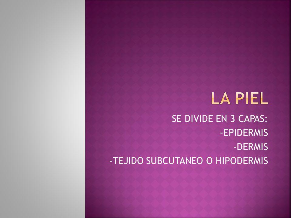 LA PIEL SE DIVIDE EN 3 CAPAS: -EPIDERMIS -DERMIS