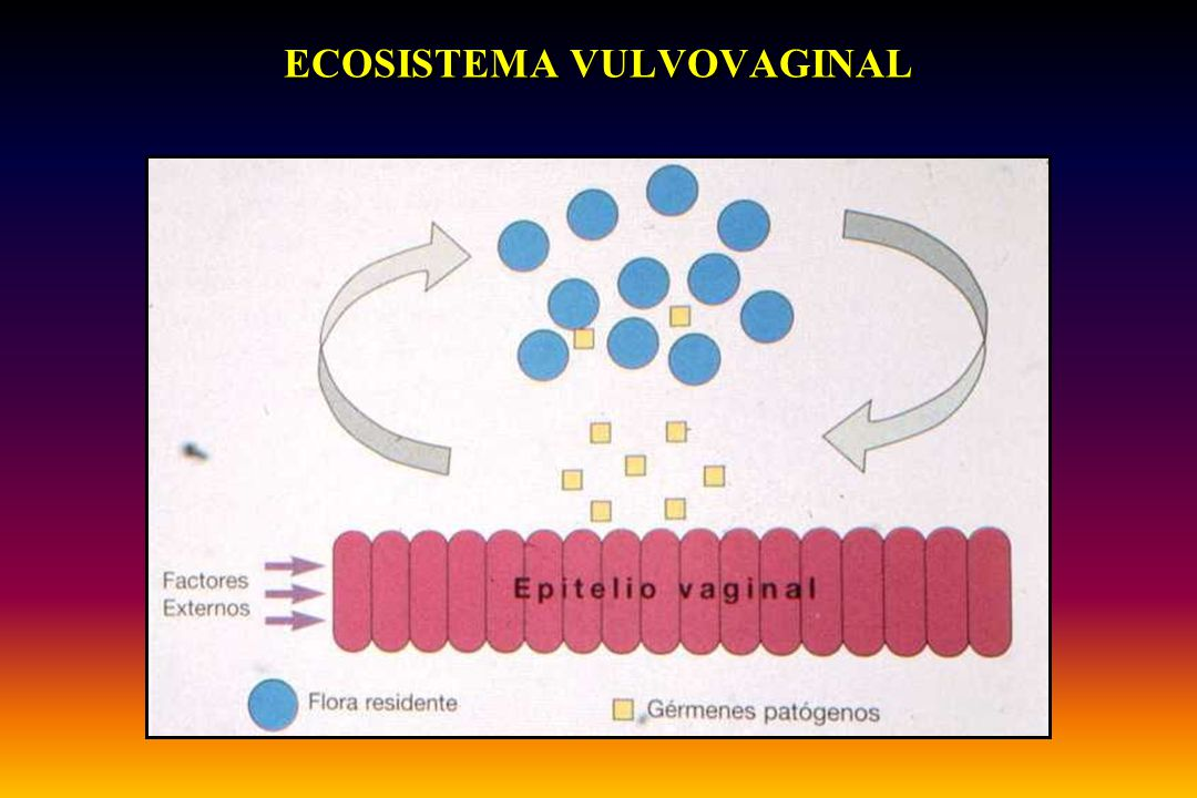 ECOSISTEMA VULVOVAGINAL