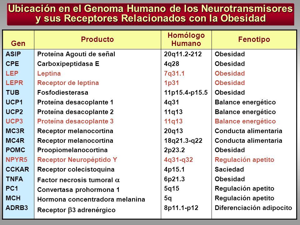 Ubicación en el Genoma Humano de los Neurotransmisores y sus Receptores Relacionados con la Obesidad