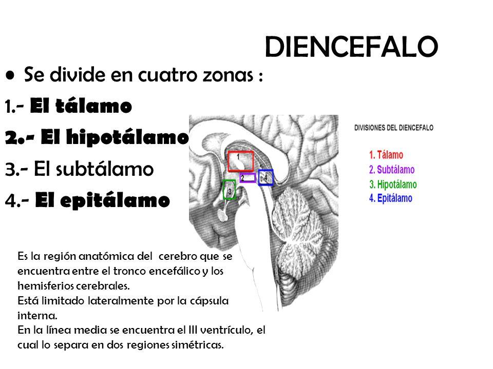 Excepcional Anatomía Núcleos Basal Imagen - Imágenes de Anatomía ...