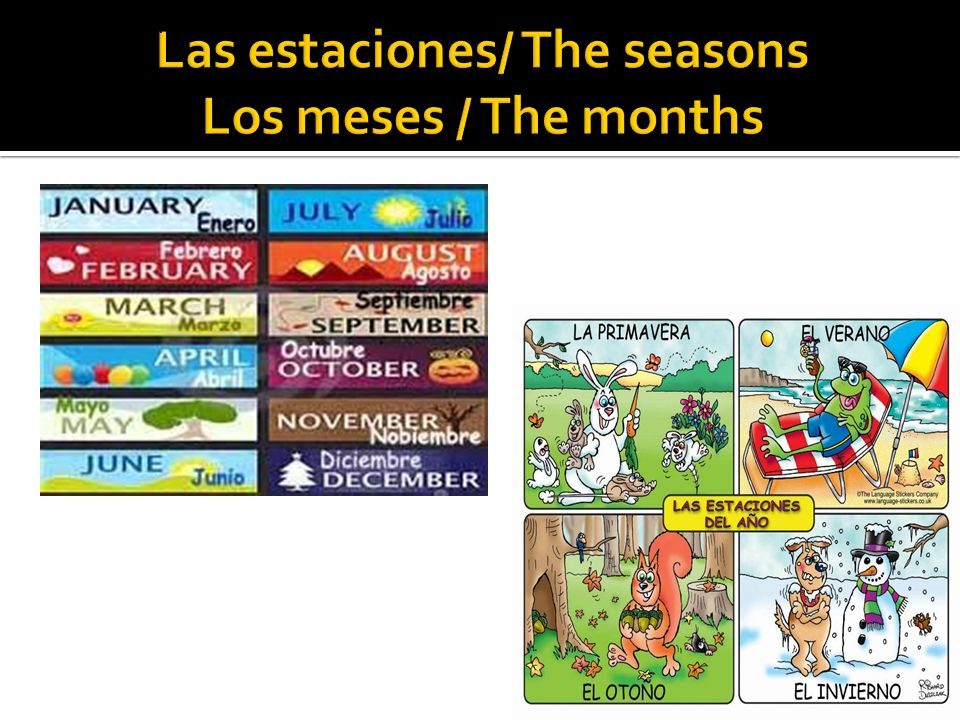 Las estaciones/ The seasons Los meses / The months