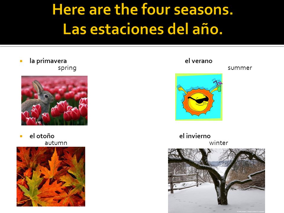 Here are the four seasons. Las estaciones del año.