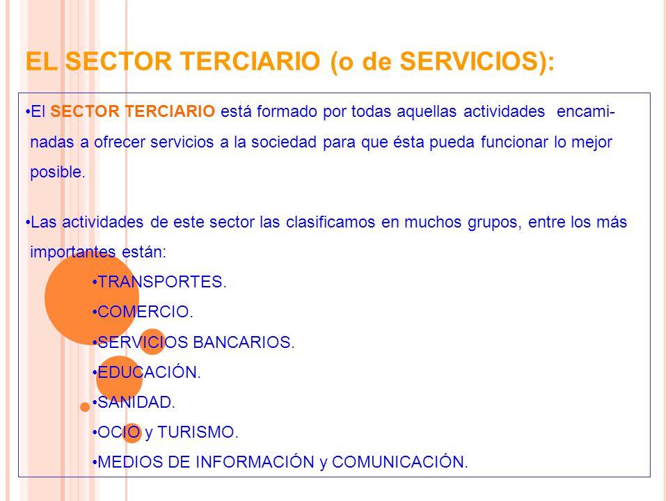 EL SECTOR TERCIARIO (o de SERVICIOS):
