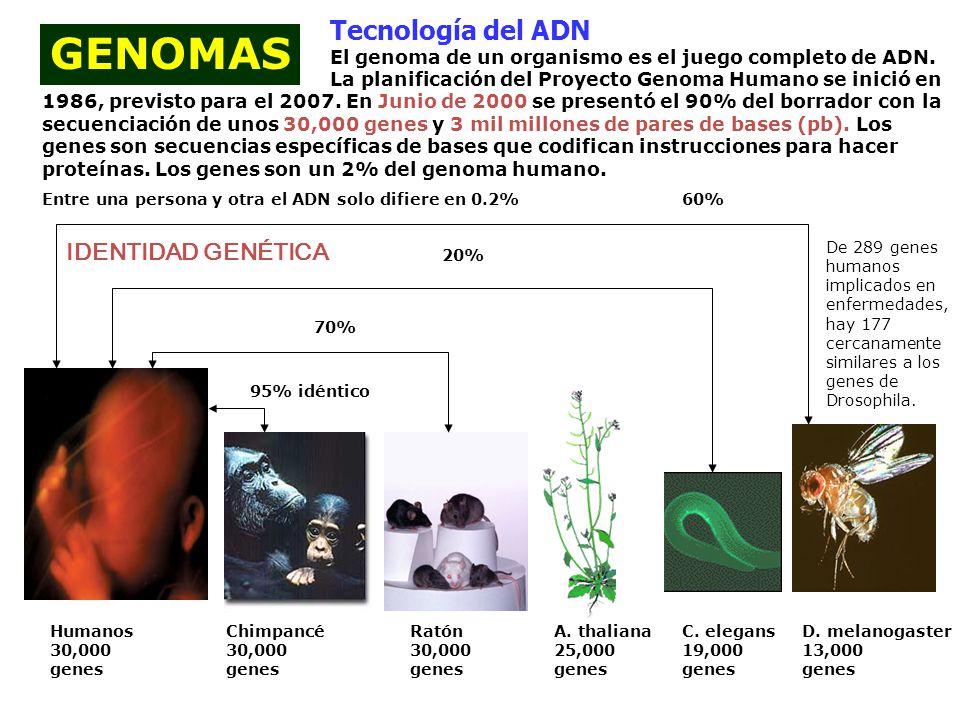 Bases moleculares de la vida adn adn arn genoma prote nas for En 2003 se completo la secuenciacion del humano