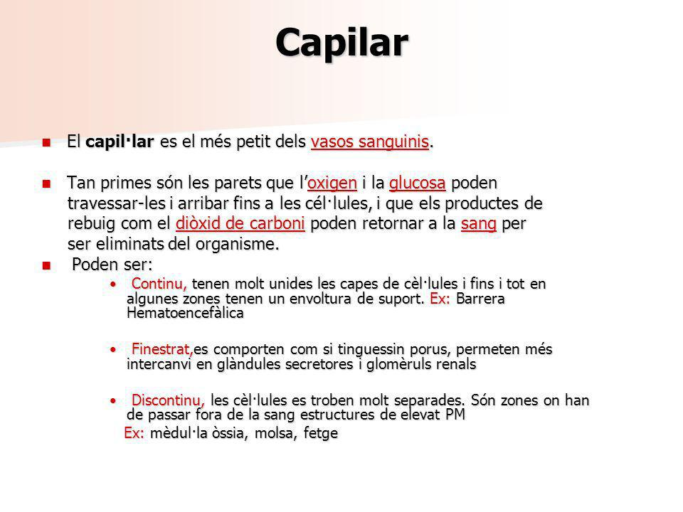 Capilar El capil·lar es el més petit dels vasos sanguinis.