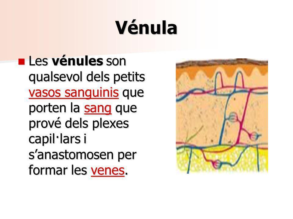 Vénula