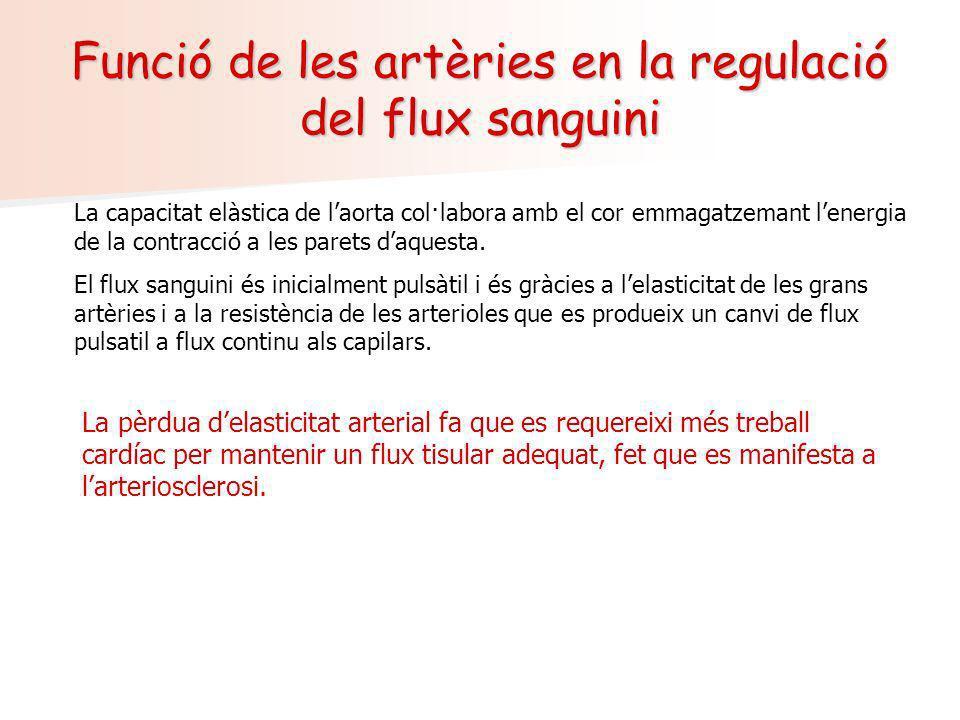 Funció de les artèries en la regulació del flux sanguini