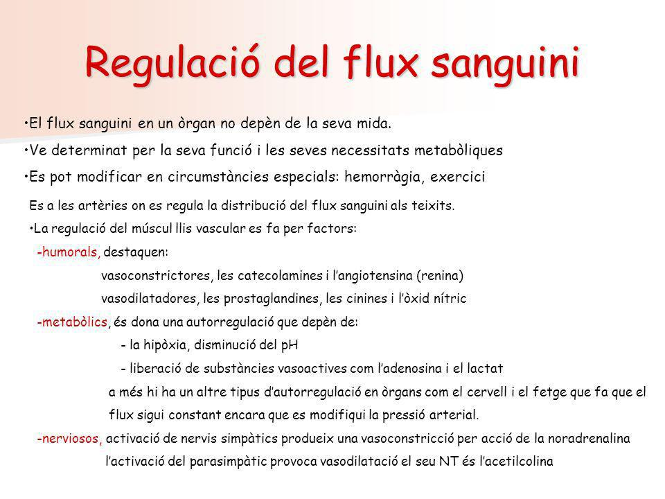 Regulació del flux sanguini