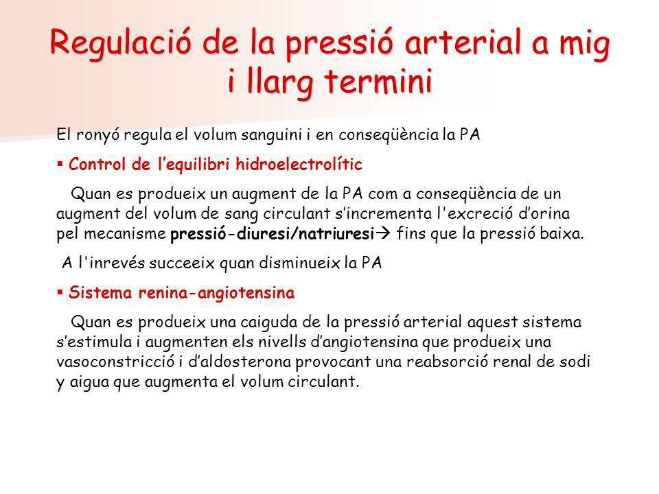 Regulació de la pressió arterial a mig i llarg termini