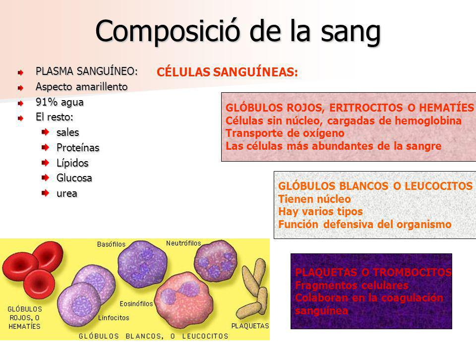 Composició de la sang CÉLULAS SANGUÍNEAS: PLASMA SANGUÍNEO: