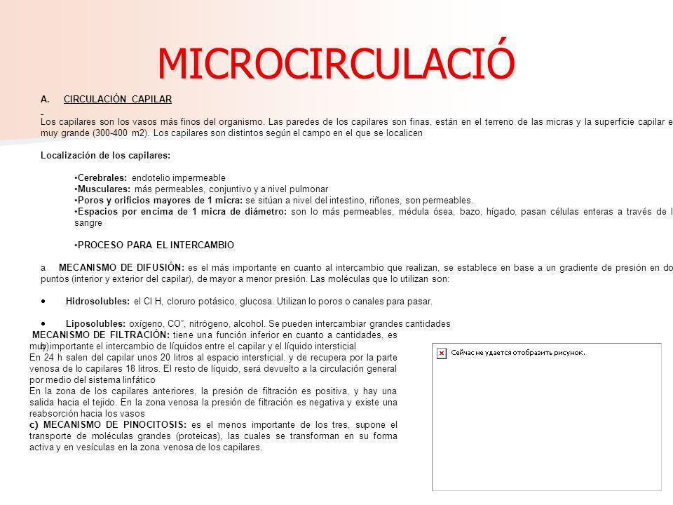 MICROCIRCULACIÓ A. CIRCULACIÓN CAPILAR
