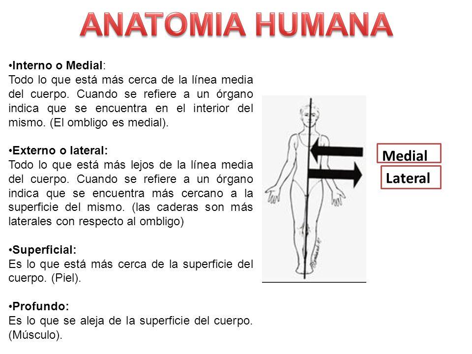 Bonito Anatomía Estudio En Línea Gratis Foto - Anatomía de Las ...