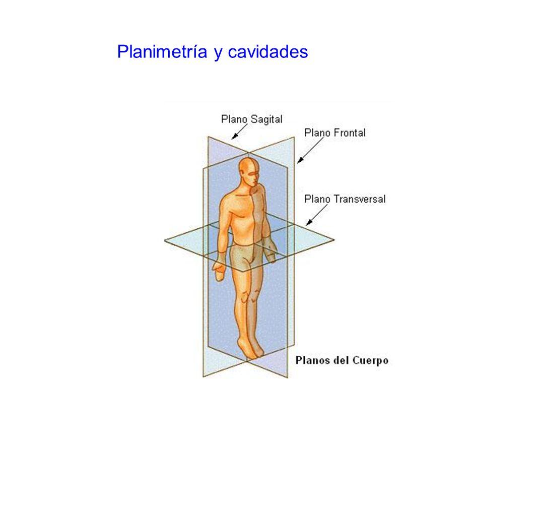 Planimetría y cavidades