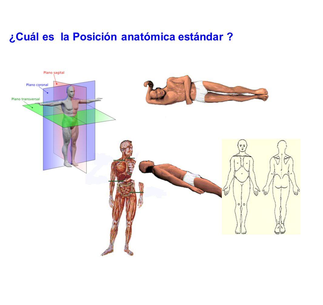 ¿Cuál es la Posición anatómica estándar