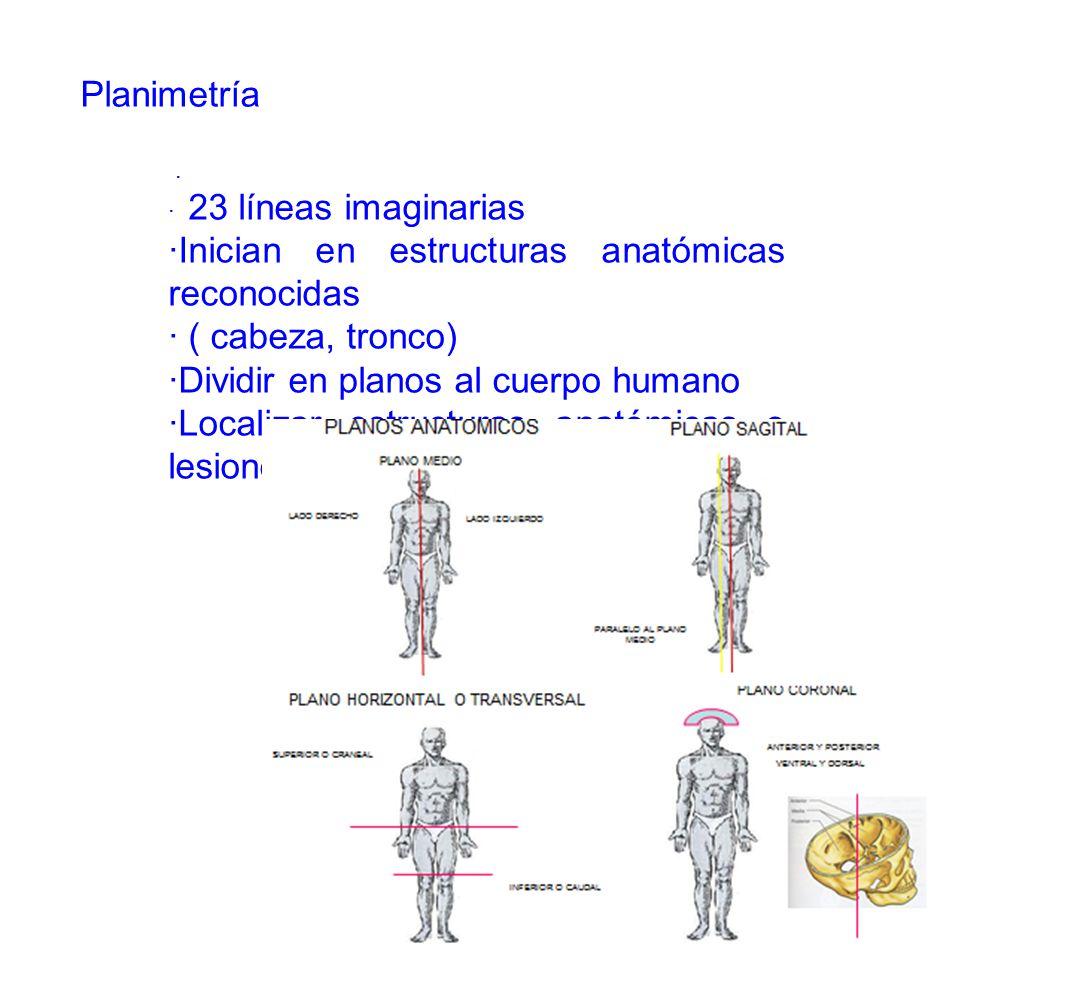 ·Inician en estructuras anatómicas reconocidas · ( cabeza, tronco)