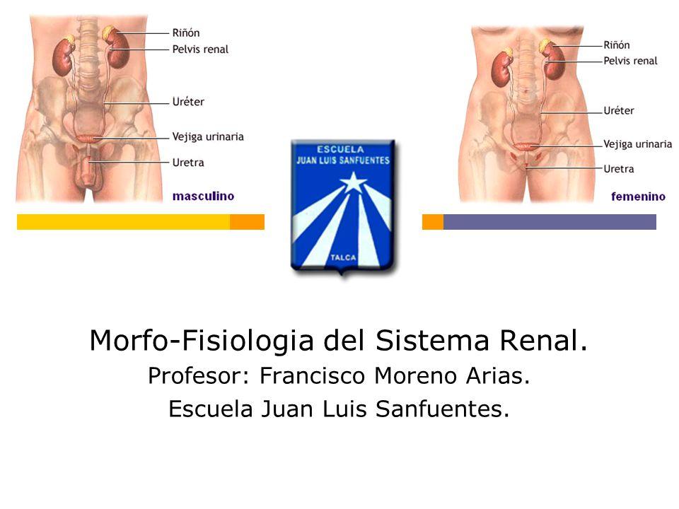 Morfo-Fisiologia del Sistema Renal.