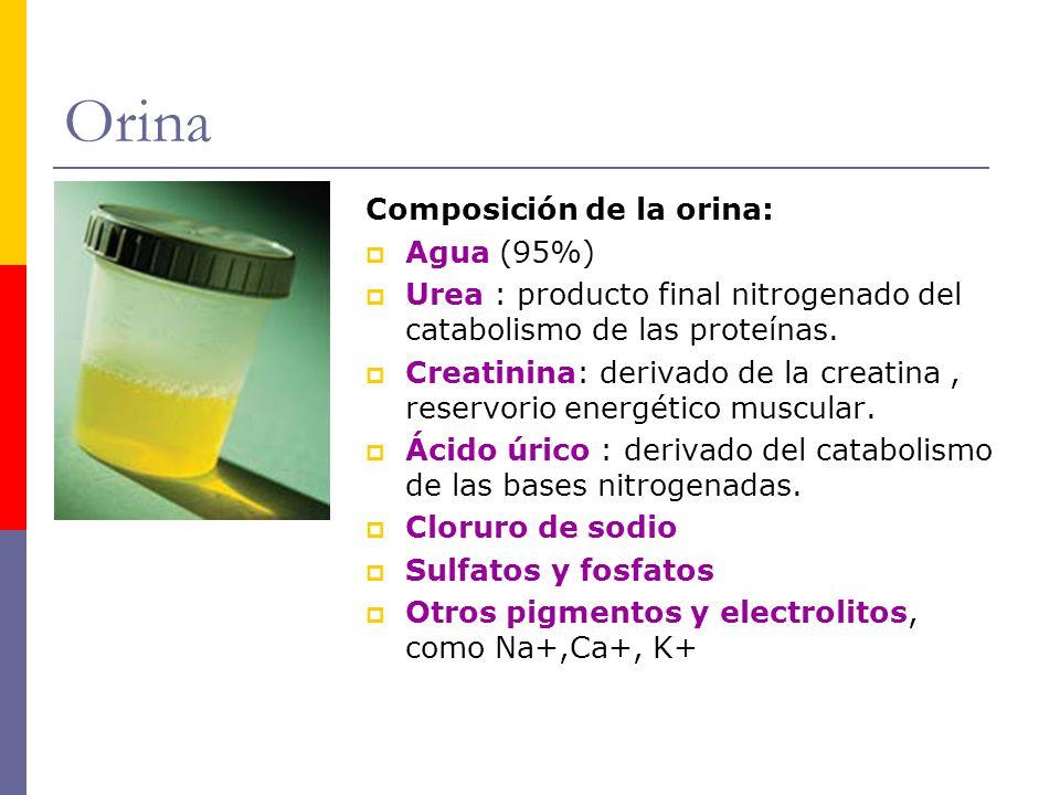 Orina Composición de la orina: Agua (95%)