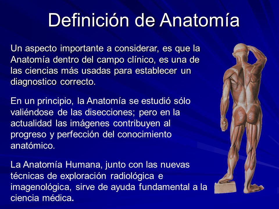 Definición de Anatomía