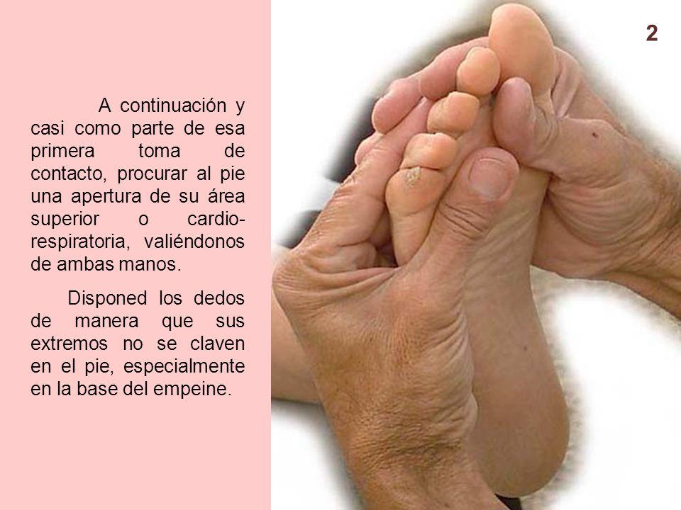 Perfecto Anatomía Del Pie Empeine Componente - Anatomía de Las ...