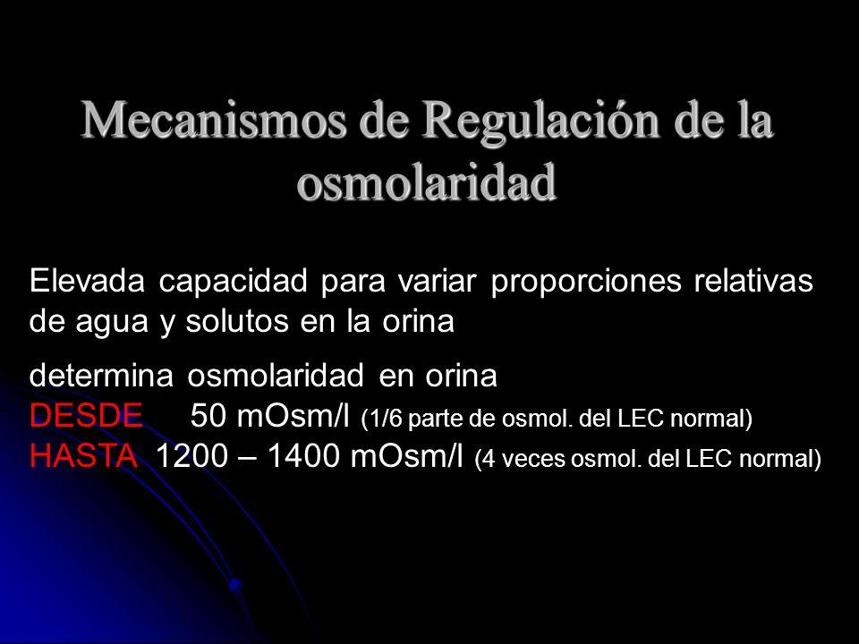 Mecanismos de Regulación de la osmolaridad