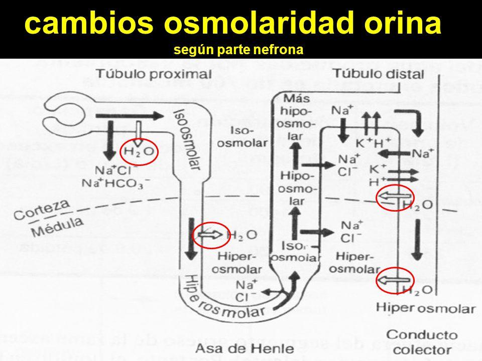 cambios osmolaridad orina