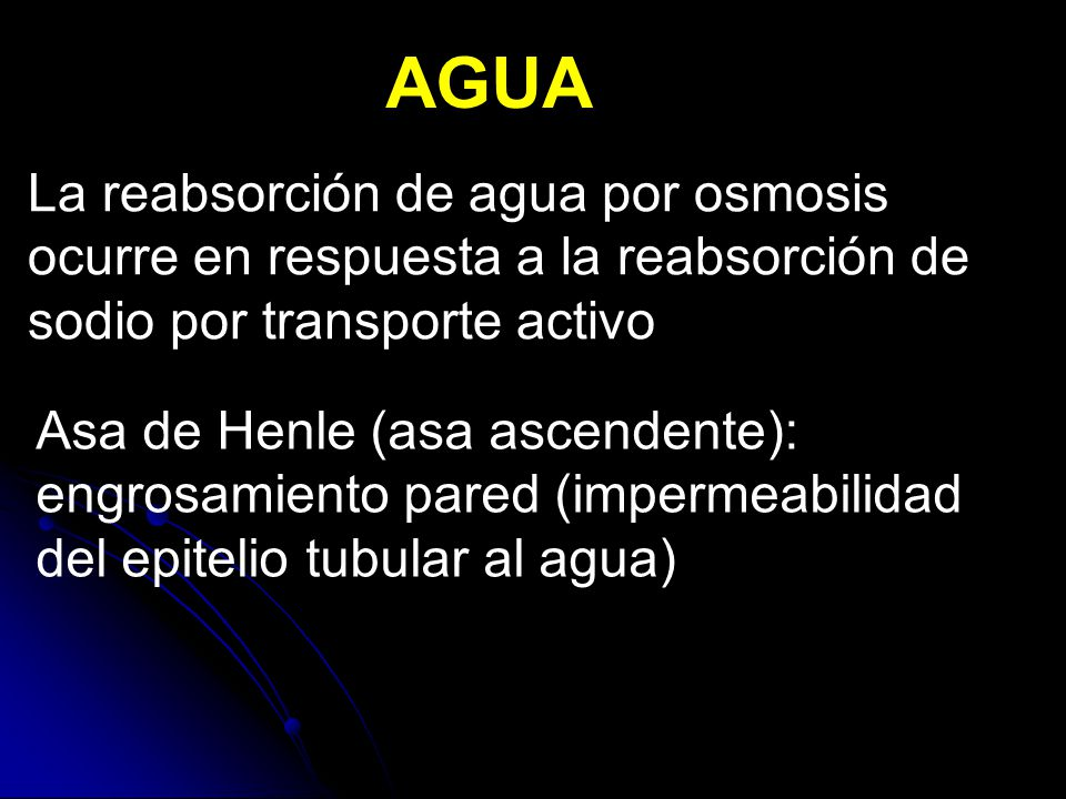 AGUA La reabsorción de agua por osmosis ocurre en respuesta a la reabsorción de sodio por transporte activo.