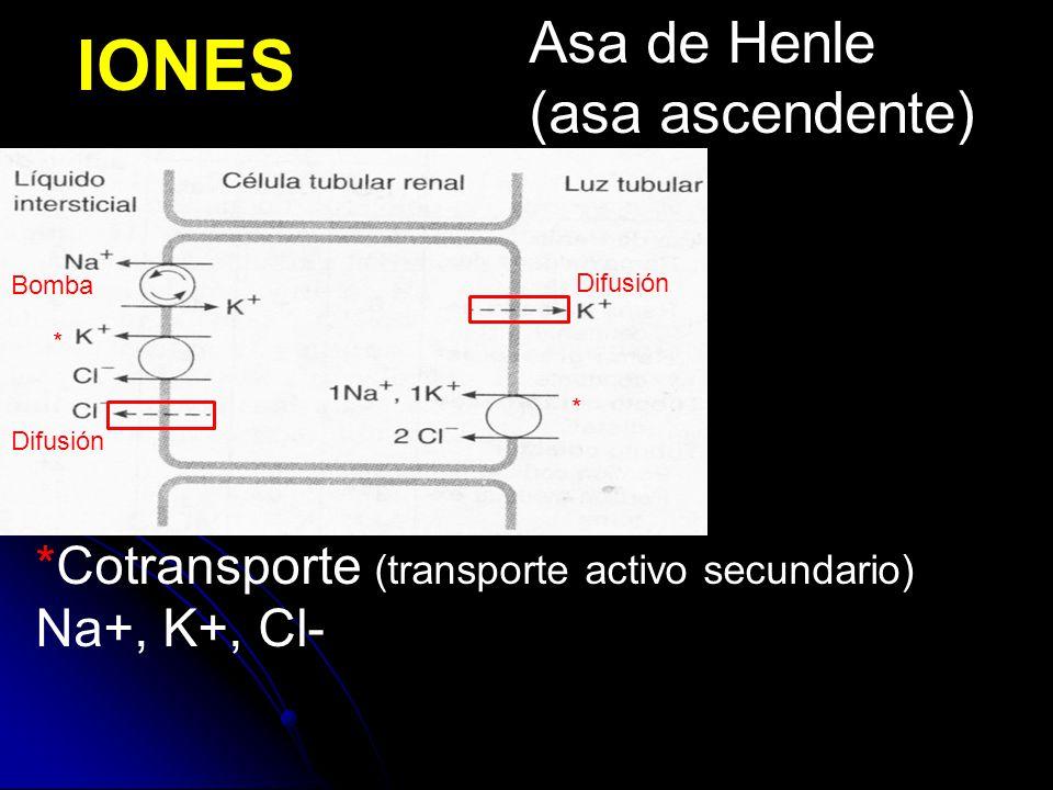 IONES Asa de Henle (asa ascendente)