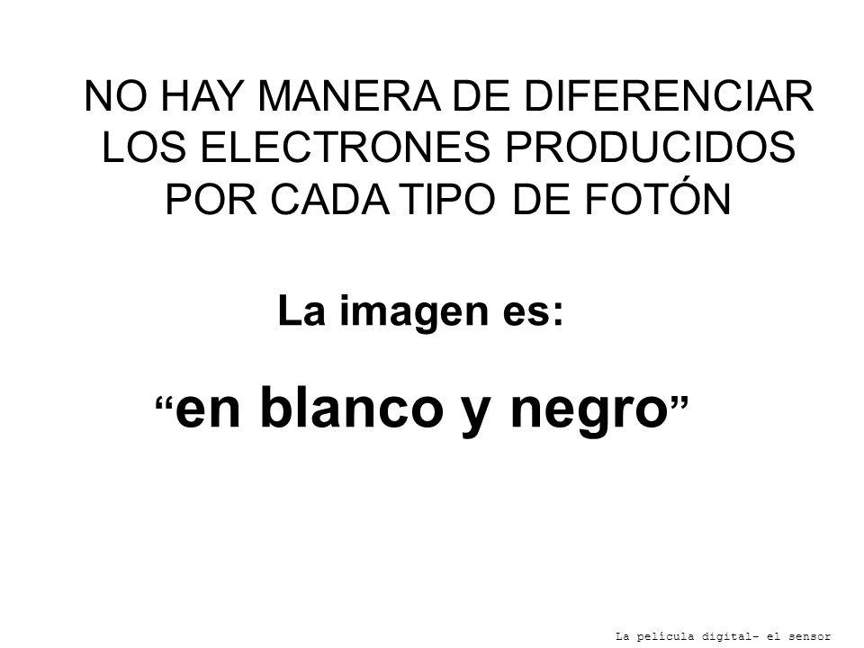La imagen es: en blanco y negro