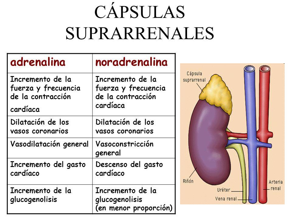 CÁPSULAS SUPRARRENALES