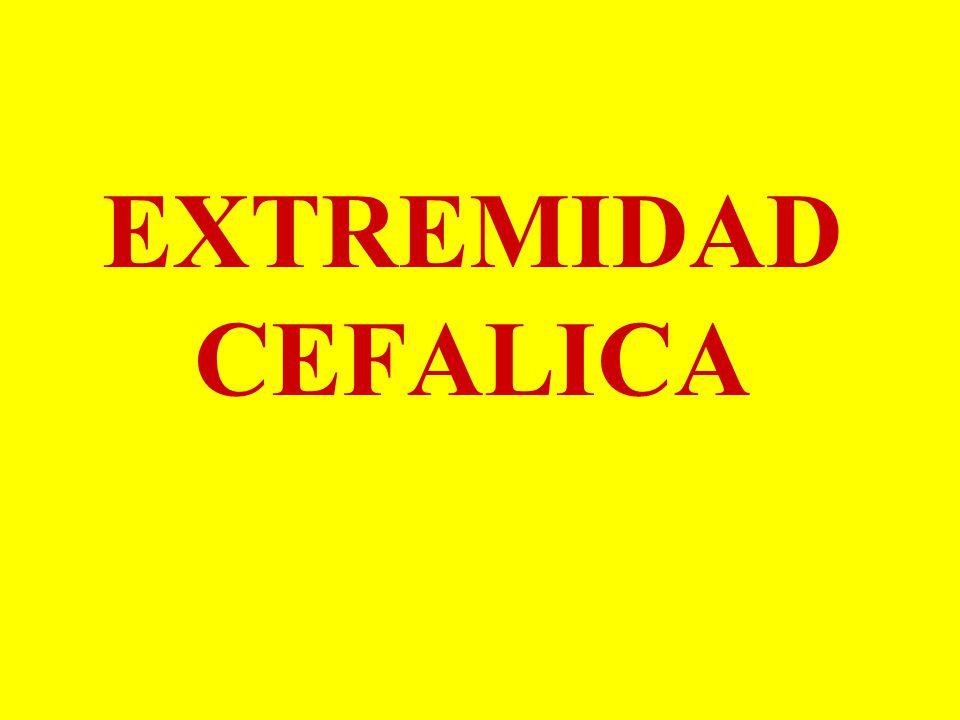 EXTREMIDAD CEFALICA. - ppt video online descargar
