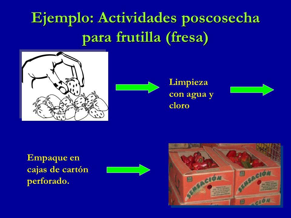 Ejemplo: Actividades poscosecha para frutilla (fresa)