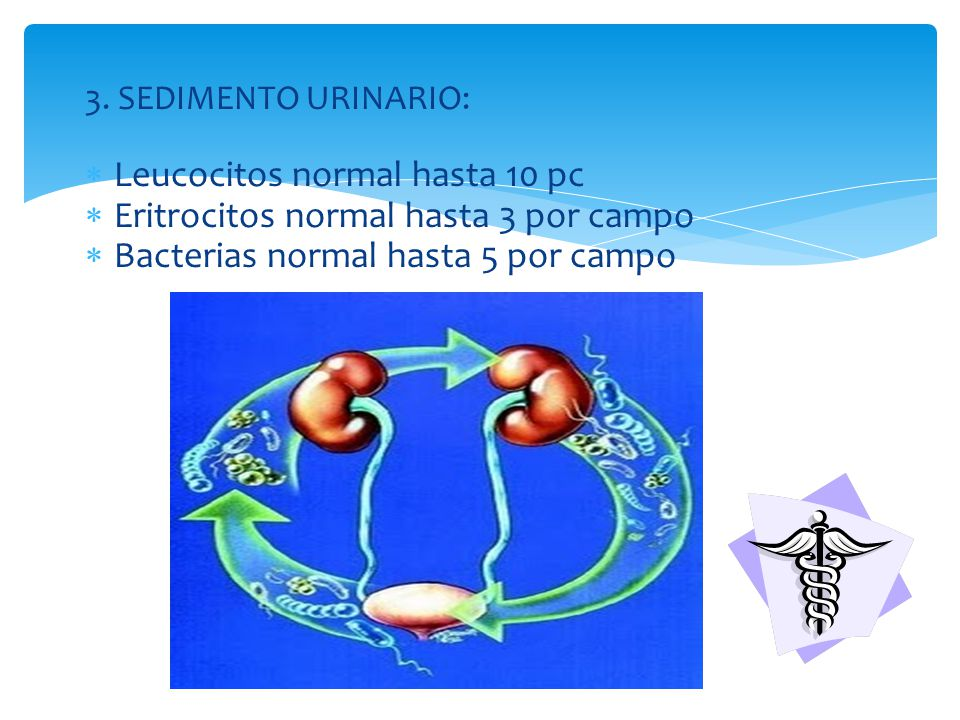 Leucocitos normal hasta 10 pc Eritrocitos normal hasta 3 por campo