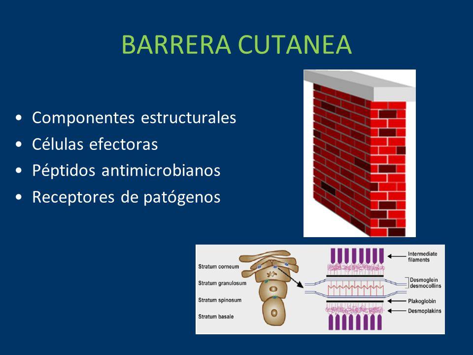 BARRERA CUTANEA Componentes estructurales Células efectoras