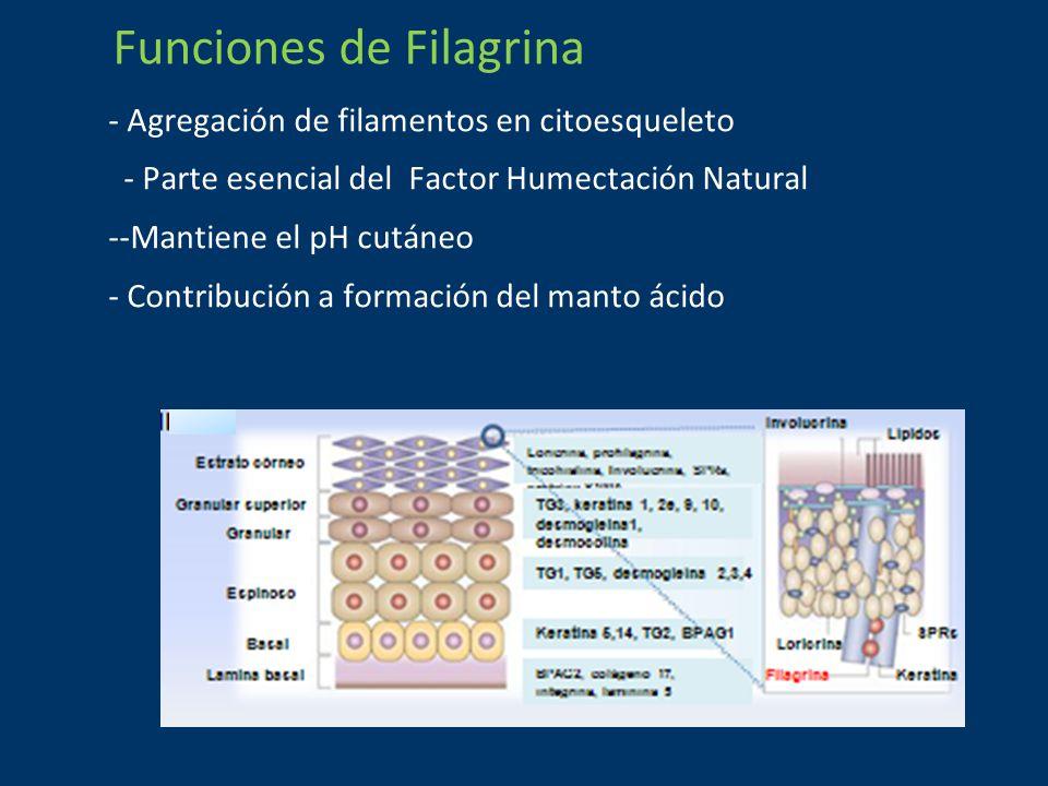 Funciones de Filagrina