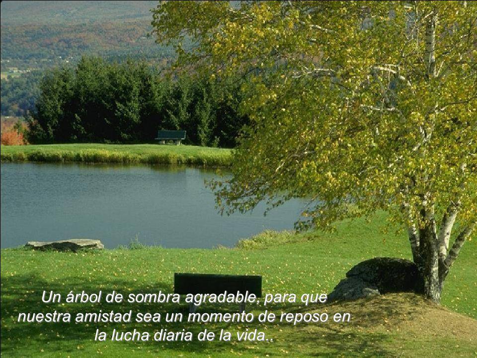 Un árbol de sombra agradable, para que nuestra amistad sea un momento de reposo en la lucha diaria de la vida..