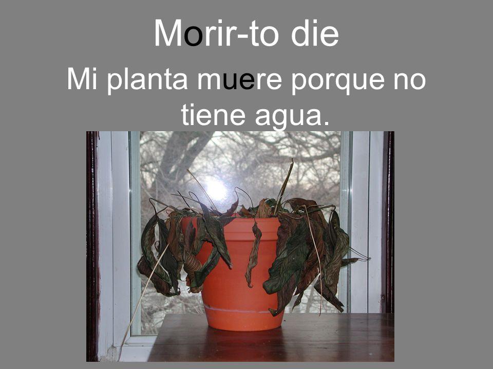 Mi planta muere porque no tiene agua.