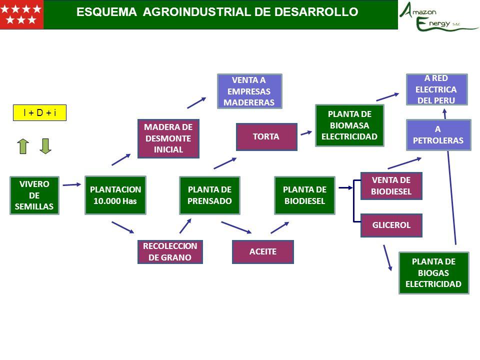 2.- ESQUEMA DE ESTRUCTURA SOCIETARIA