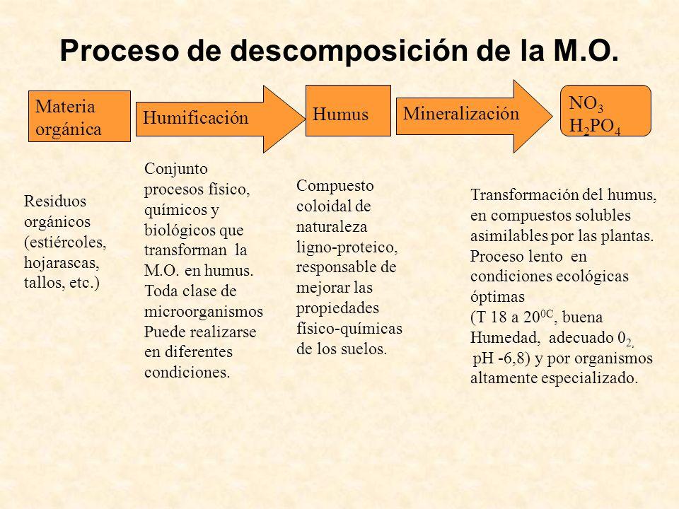 Proceso de descomposición de la M.O.