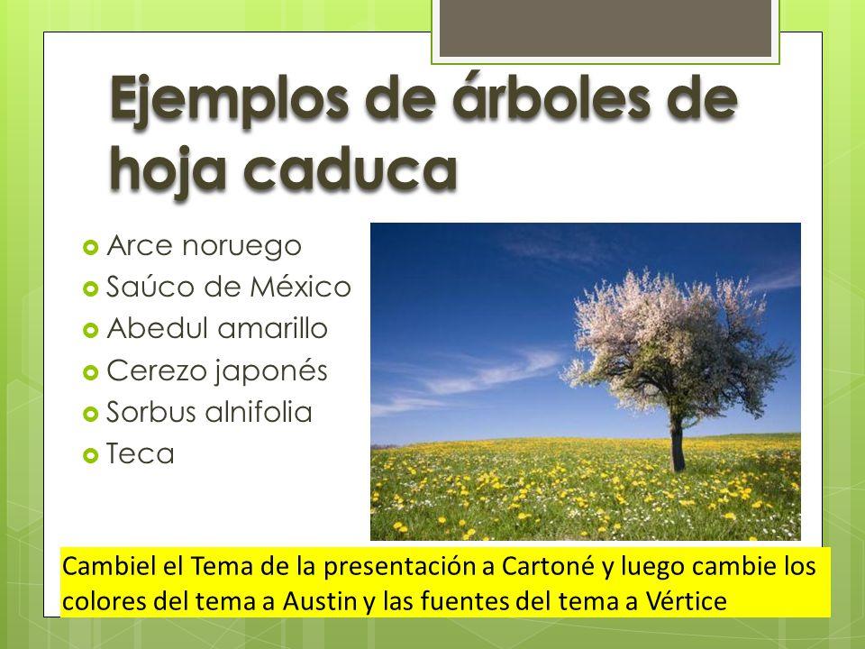De hoja caduca y de hoja perenne ppt video online descargar for Arboles de hoja perenne informacion