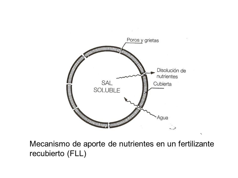 Fertilizantes y su uso en hidropon a ppt descargar for Un fertilizzante