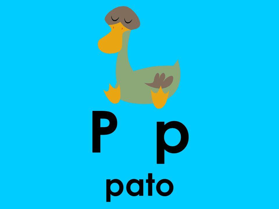 P p pato