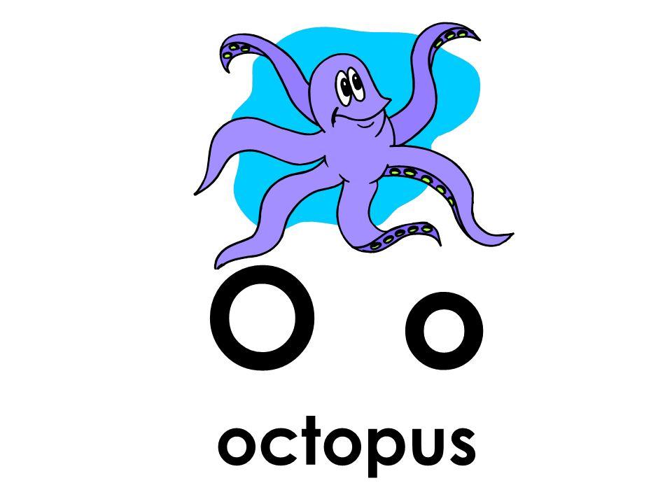 O o octopus