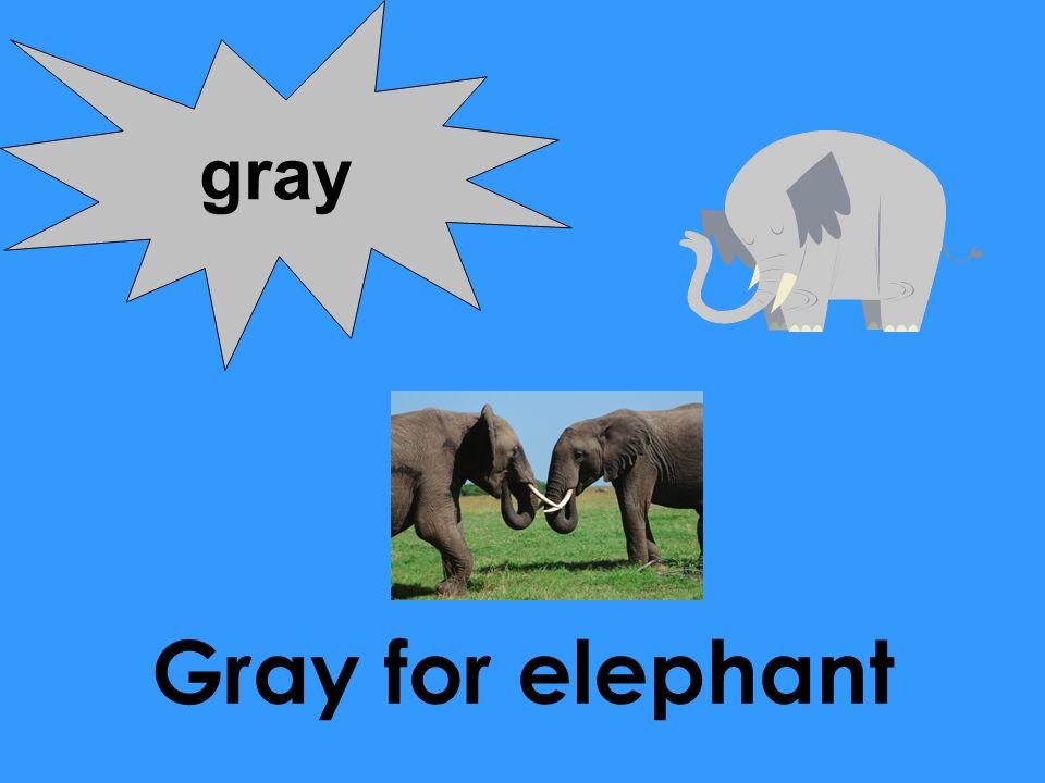 gray Gray for elephant