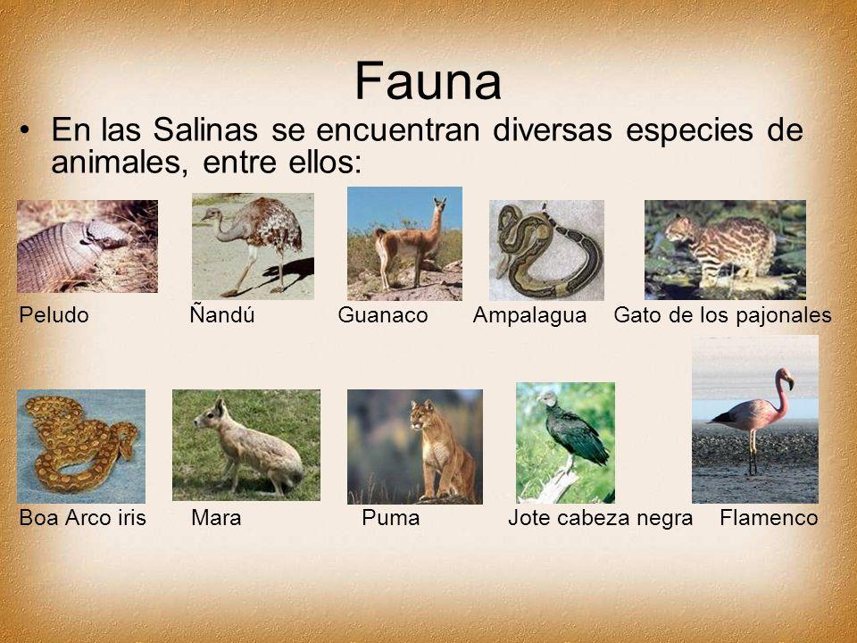 Fauna En las Salinas se encuentran diversas especies de animales, entre ellos: