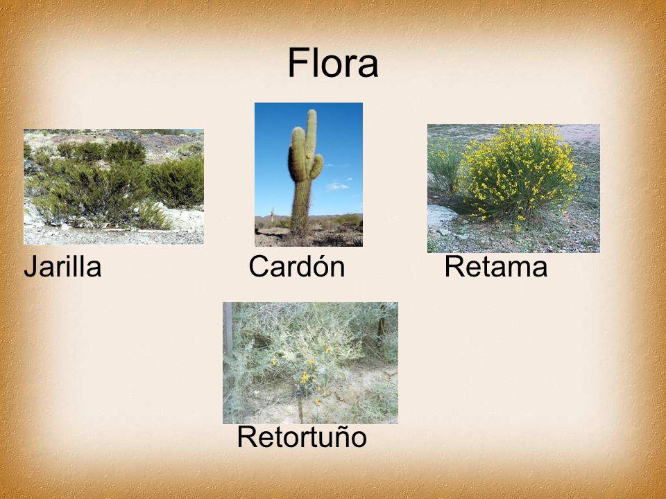 Flora Jarilla Cardón Retama Retortuño