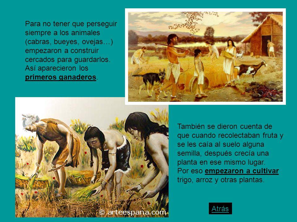 Para no tener que perseguir siempre a los animales (cabras, bueyes, ovejas…) empezaron a construir cercados para guardarlos. Así aparecieron los primeros ganaderos.