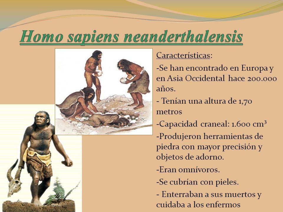 Q Significa Neanderthal Evolución de los ...