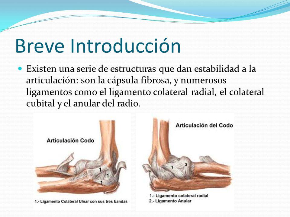Atractivo Anatomía Del Codo Ligamento Bandera - Imágenes de Anatomía ...