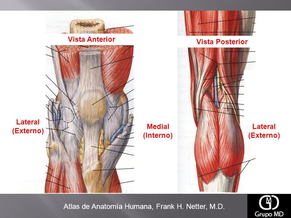 Excepcional Anatomía De La Rodilla Trasera Cresta - Anatomía de Las ...
