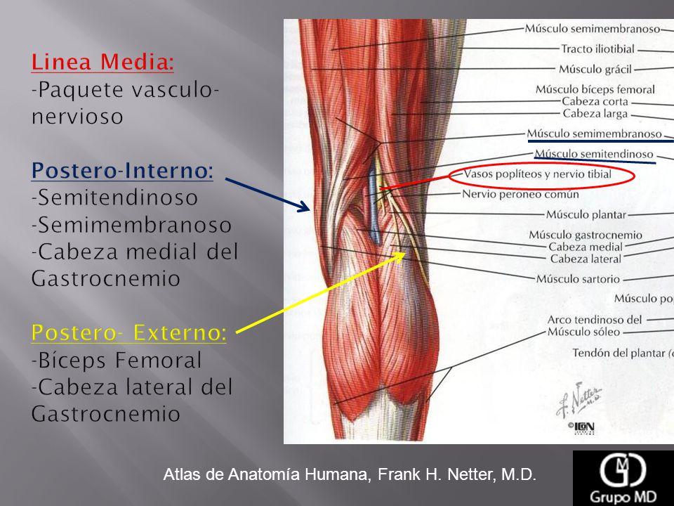 Increíble Gastrocnemio Cabeza Medial Galería - Anatomía de Las ...